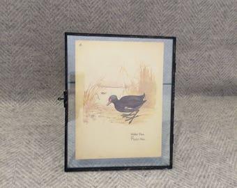 Genuine vintage framed botanical drawing, flower illustrations, print, floral, glass frame, double sided bird water hen moor brown leaves