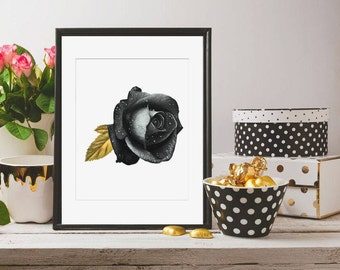 Black and Gold Rose Drawing Print 6x8