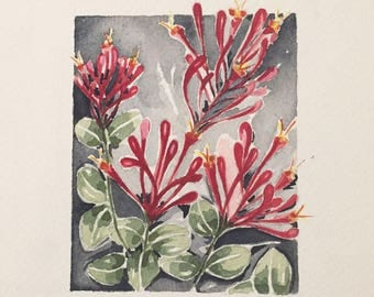 Lonicera Flowers Red-Fuchsia ORIGINAL Watercolor Art Prints Botanical Decoration. BOTANICAS Collection.