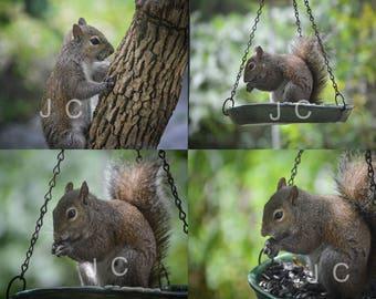 Squirrels Digital Copy