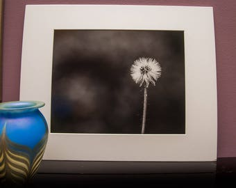 Matted Art Print-Nature-Flower-Black&White-Single Flower-Dandelion-Home Office Decor- White Matt-Travel-Gift-Photo-Art-Lithuania