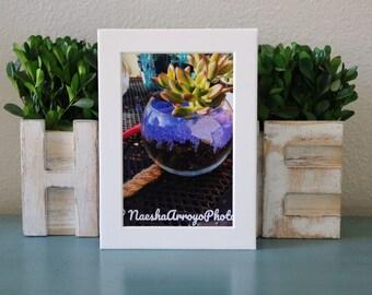 Succulent Party 4x6 image decorative cactus, Print, Photo