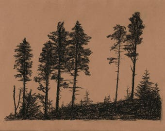 Charcoal pine and fir trees landscape