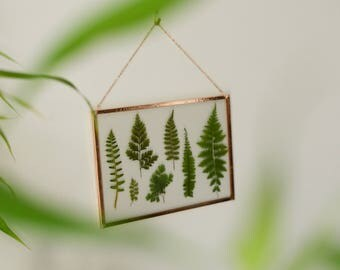 """Real pressed plant wall hanging   collection of ferns   5x7"""" glass with copper edging   glass herbarium   botanical home decor"""