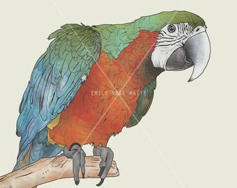 Parrot - A4 Print, Illustration, tropical