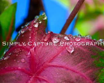 Pink Leaf Droplets Print