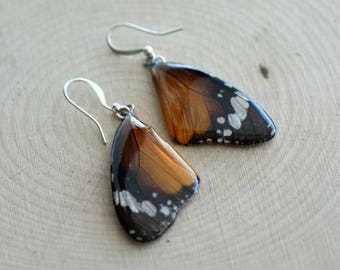 1 Pair REAL Butterfly Wing Earrings Preserved in Resin - Nature Earring Insect Charm