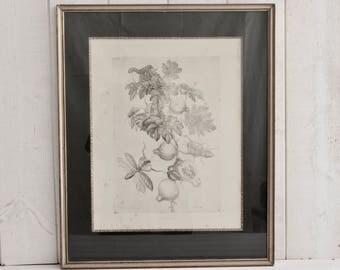 Stunning Antique Victorian Botanical print. Framed.  FRUIT.