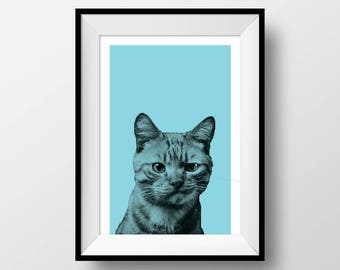 grumpy cat, blue, pop culture, mad, funny, silly, animals