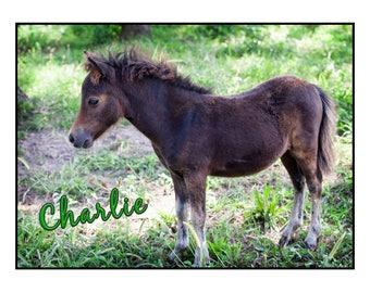 Set of 10 Horses & Heroes Charlie Cards