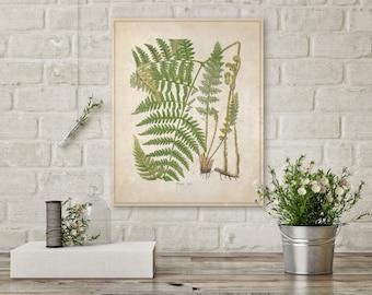 Green Fern, Botanical Fern, Plants on Canvas, Fern Canvas, Botanical Canvas, Vintage Art, Nature Canvas, Wall Decor, Wall Art