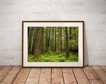 Green Trees Forest - Photography Print