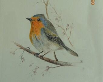 Robin, colored pencil on canson