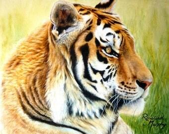 Tiger (print of original watercolour painting)