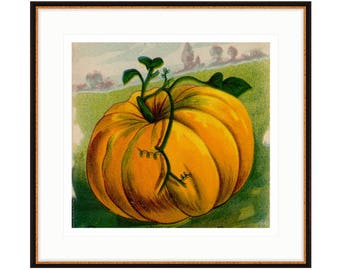 Hello Halloween. Framed pumpkin print from 1916 vintage seed pack. This would look great in your kitchen or dining room.