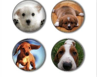 Puppy magnets or puppy pins, dog magnets, dog pins, funny animal magnets pins, refrigerator magnets, fridge magnets, office magnets