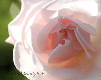Pale pink rose print, macro, close up, flower photography, nature photography, garden rose, floral wall art, fine art, rose, nature print