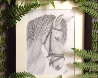 Original graphite pencil horse drawing.