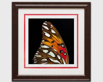 butterfly wall art, wall art, framed butterfly, real butterfly, butterfly lover gift, entomology, framed insect, real estate gift