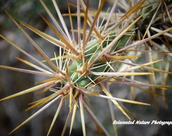 Cactus of Baja Photo - 3 of 4 - 12 x 12 Matted Original Photography  - Reclaimed Wood Frames