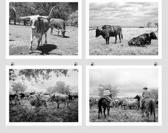 Longhorn Steer Photo Collection, Texas Cows, Black White Photo, Farmhouse Modern Wall Art, Cows, Photography, Country Cabin, Southwest Decor