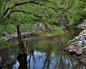 River & Trees Photography