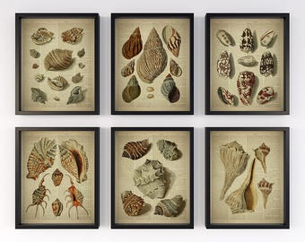 Vintage nautical prints, Set of 6 prints, Dictionary page art, Antique sea shells illustration, Print for wall, Set of 6 wall art, 8x10 JPG