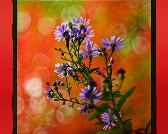Wall Art Tile Ceramic Square Photograph Flowers Purple Orange Red  Green Stem  Connecticut Decorative Table Art Coaster National Park Trail