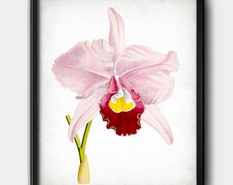 Pink orchid · Flower · Digital File · Instant Download · Botanical · Printable #172