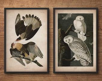 Audubon birds, Print set, Eagle print, Owl print, Audubon print, Birds of America, John James Audubon, Large print, Wall art