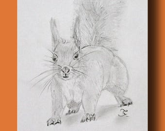 Drawing of a surprised squirrel, straight tail