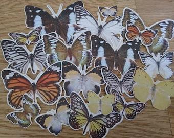 Butterfly die cut set, 19 pieces