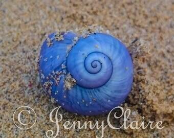 purple spiral shell. beach photography. ocean photography. shell. sand. spiral art