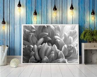Digital image - Close-up flower