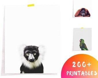 Monkey Print, Nursery Animal Print, Safari Animal Wall Art, Safari Decor, Printable Art, Downloadable Art, Baby Animal Wall Decor