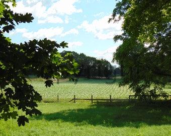 Canvas Farmland