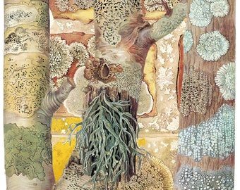 Limited edition giclée print of original collage 'Lichen; Character Studies in Plant Life'