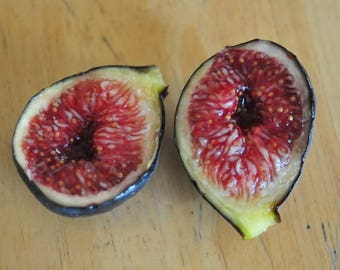 Ficus carica Black Madeira * Portuguese fig varieties 50 fresh seeds