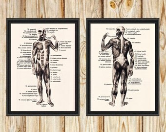 Human Body Front and Back Two Vintage Prints - Anatomy Illustration - Printable Art - Instant Download