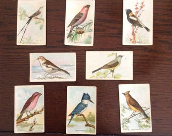 "Vintage Dwight & Co Bird Cards, 8th Series, 14 cards, 1940s, ""Useful Birds of America"", M E Eaton"