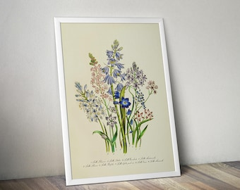 Scilla Botanical Print Vintage, Floral Wall Art, Large Botanical Prints Posters,  Downloadable Watercolor Painting Squill Hyacinth Herbarium