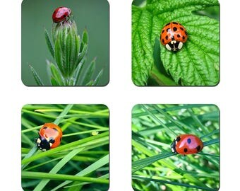 Set of 4 Ladybird drinks coasters featuring award winning photography by UniquePhotoArts.