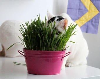 ORGANIC CAT GRASS - Oats - Great Treat for Feline Digestive System - 1 lb. Seeds