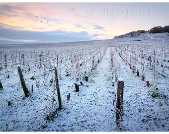 Print color: Burgundy Vineyards in the snow