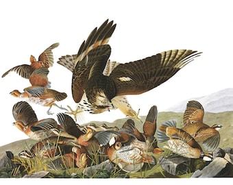 Audubon's Plate 76 Virginian Partridge Cross Stitch Pattern
