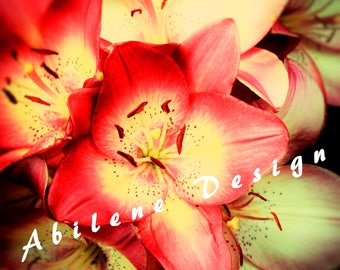 Floral Stock Photo, Red and Yellow Flower Media Style Image, Floral Printable, Blog