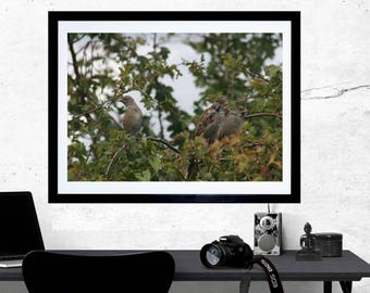 Sparrows print, photography print, nature photograph, wildlife lover gift, sparrows photograph, country home