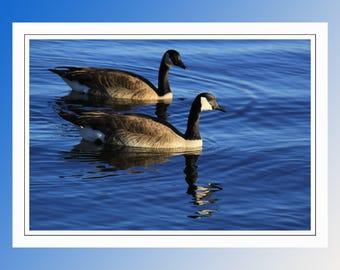 Canadian Geese. A Bi-fold Blank Note Card