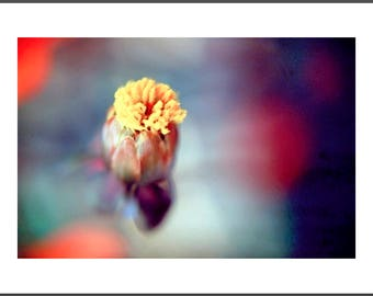 Photograph Tropical Flower MF-LS028