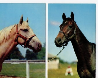 Lot of 2 Vintage Horse Postcards | Art Horse Photograph Card | Nature, Animals | Jockey, Horseback Riding, Horse Love | Paper Ephemera